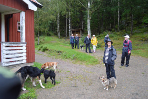 vandring i Svartedalen 1/9 2015